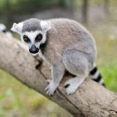 image of meerkats  - Wild meerkats  - JPG