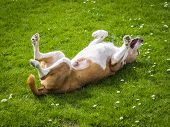image of happy dog  - happy dog on a sunny day - JPG