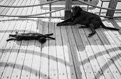 foto of homeless  - Black homeless cat and dog are resting in the shadow on a wooden footbridge - JPG