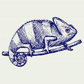 foto of chameleon  - Chameleon - JPG