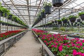 stock photo of greenhouse  - Dutch Garden center selling plants in a greenhouse - JPG