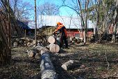 stock photo of man chainsaw  - Worker cuts a big windfallen tree with a chainsaw - JPG