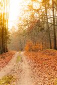 image of fall day  - Fall landscape - JPG