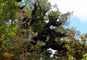 picture of creepy  - A creepy tree in a mystical forest of Taranaki volcano - JPG