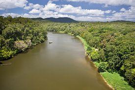 picture of rainforest  - River in Daintree Rainforest in Queensland - JPG