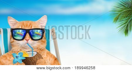 Cat wearing sunglasses relaxing sitting on deckchair in the sea background. picture