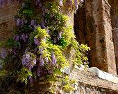 Spring In Rome