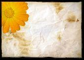 Aged burnt paper & flower, background