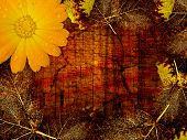 Autumn background, leaves & flower