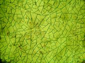 Abstract cracked green background
