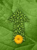 Green plant arrow with yellow flower