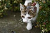 Wild kleines Kätzchen