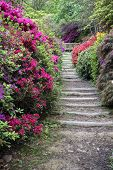 Beautiful Vibrant Landscape Image Of Footpath Border By Azalea Flowers In Spring In England poster