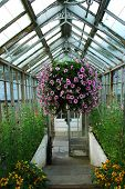 Greenhouse With Hanging Basket