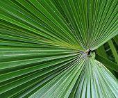 Abstrakte Muster in der Natur - Blatt eine Zwergpalme