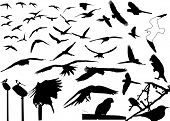 stock photo of animal silhouette  - Birds - JPG