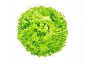 Batavia Lettuce Salad Head Isolated On White Flatlay Top View. Green Leafy Vegetable. French Crisp V poster