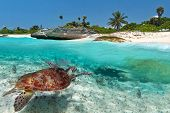 stock photo of undersea  - Caribbean Sea scenery with green turtle in Mexico - JPG