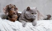 puppy and kitten , Group of cat and dog poster