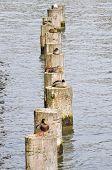 Ducks On Poles