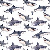 Beautiful Seamless Pattern With Hand Drawn Watercolor Sharks poster
