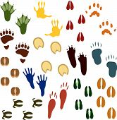 picture of hoof prints  - Fourteen Sets of Animal Tracks in different colors - JPG