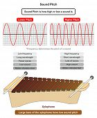 Sound Pitch infographic diagram showing comparison of high and low frequency sound waves also exampl poster