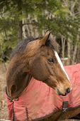 Horse Looking Backward