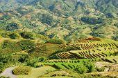 Farm de Sapa, Vietname