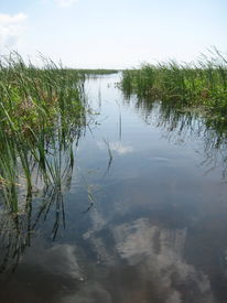 image of airboat  - airboat trail through the sawgrass on a lake - JPG