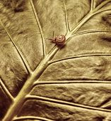 pic of escargot  - Photo of cute little snail crawling on fresh leaf - JPG