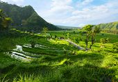 Green rice fields among mountains. Bali, Indonesia
