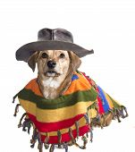 foto of mexican-dog  - brown dog with Mexican sombrero and poncho - JPG