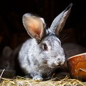 image of rabbit hutch  - Cute rabbit popping out of a hutch  - JPG