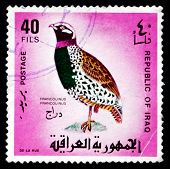 Postage Stamp Iraq 1968 Black Francolin, Gamebird
