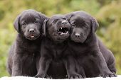 Funny Dog Puppies