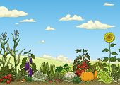 picture of aubergines  - Landscape with vegetable garden bed vector illustration - JPG