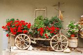 Red Geraniums On Antique Wooden Cart