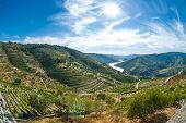 Vineyars im Douro-Tal