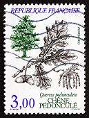 Postage Stamp France 1985 French Oak, Tree, Leaves And Fruit