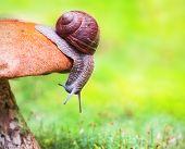 Caracol em cogumelo