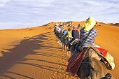 stock photo of sahara desert  - Camel caravan going through the sand dunes in the Sahara Desert - JPG
