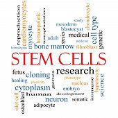 foto of fibroblast  - Stem Cells Word Cloud Concept with great terms such as research human medical and more - JPG