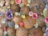 Cap Off Mushrooms