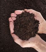 stock photo of rich soil  - Hand holding soil surface top view - JPG