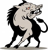pic of razorback  - vector illustration of a wild pig - JPG