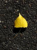 yellow leaf on black asphalt