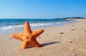 Orange starfish on the sandy beach with sea waves in the background