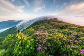 Roan Highlands Catawba Rhododendron Foggy Sunrise