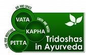 image of ayurveda  - Conceptual image of Tridoshas in ayurveda with related information - JPG